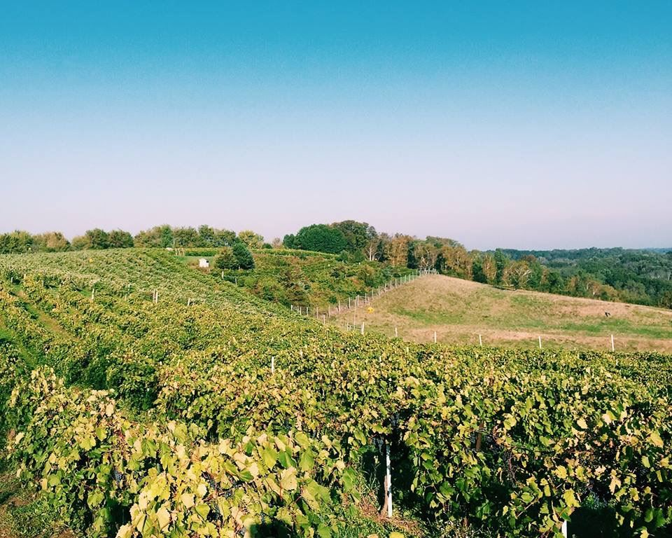 Overview of a Vineyard