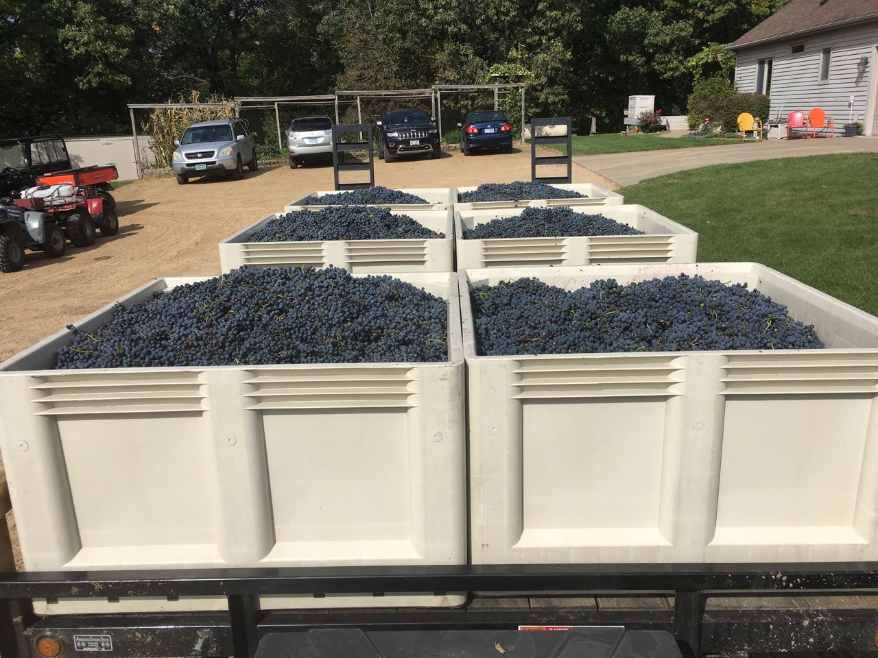 Crates ofGrapes